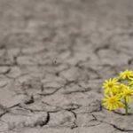 Resiliência - Um comportamento essencial